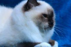 1_art-feline-unique-profil